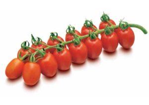 томат дашер
