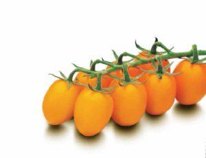 томат органза